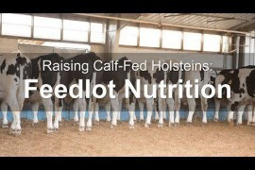 Raising Calf-Fed Holsteins: Feeding Transition