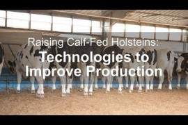 Raising Calf-Fed Holsteins: Technologies to Improve Production