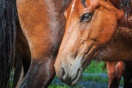 Filth Fly Control on Horse Farms