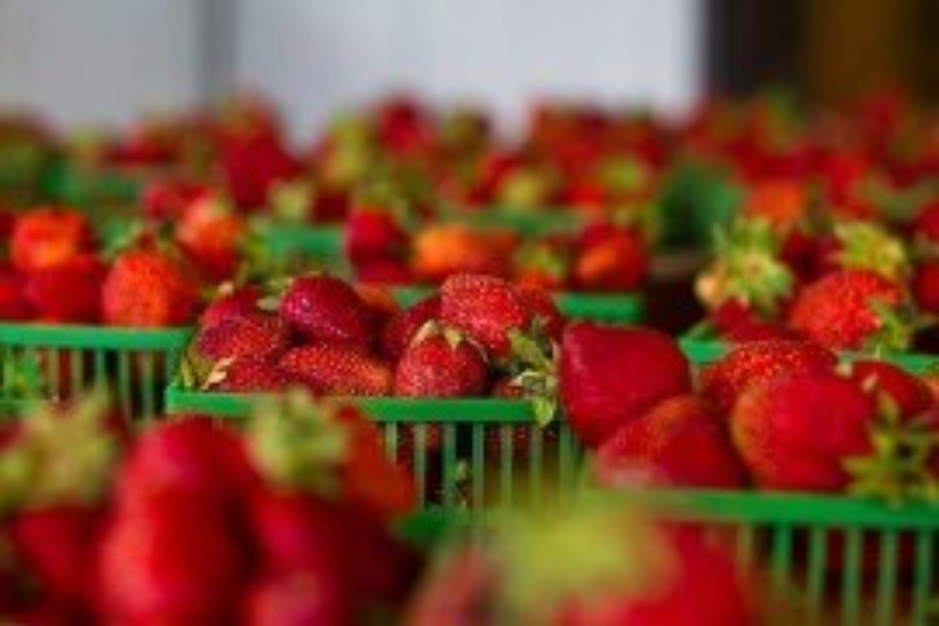Small Fruit Pesticide Update