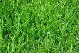 Turfgrass Fertilization: A Basic Guide for Professional Turfgrass Managers