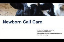 Maternity Management Practices in Dairy Farms: Newborn Calf Care