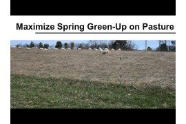 Maximizing Spring Green-Up on Pasture