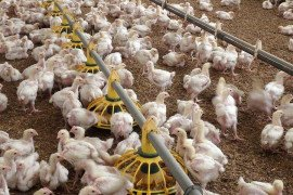 Detecting Ammonia in Poultry Housing Using Inexpensive Instruments