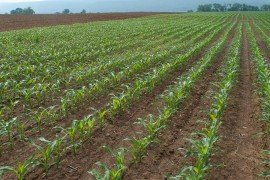 Agronomy Scout School: Crop Scouting Fundamentals