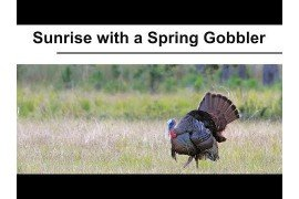 Sunrise with a Spring Gobbler