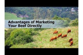 Advantages of Marketing Your Beef Directly