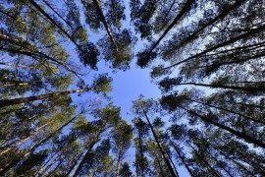 Forest Economic Data: Northumberland County