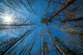 Forest Economic Data: Snyder County