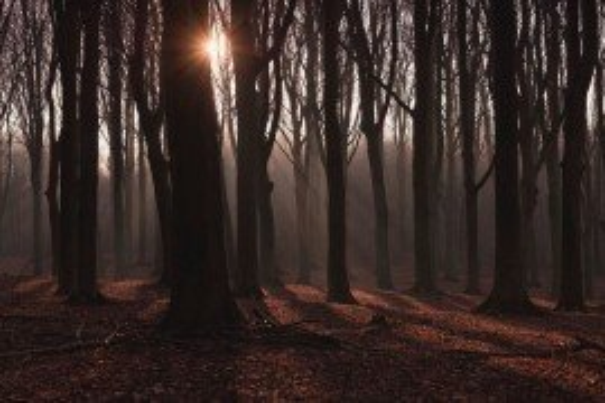 Forest Economic Data: York County