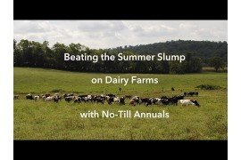 Beating the Summer Slump on Dairy Farms with No-Till Annuals