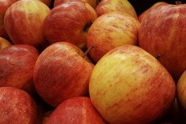 Home Orchards: Table 4.2. Non-Scab Resistant Apple Varieties