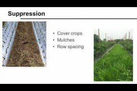 Integrated Weed Management for Fruit and Vegetable Production