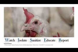 Protecting your Poultry