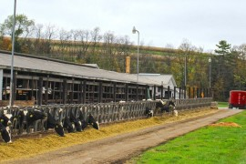 Milk Price, Feed Cost, and Margin: A Historical Perspective