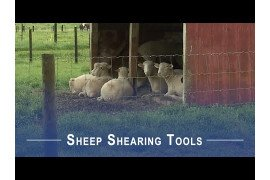 Sheep Shearing Tools