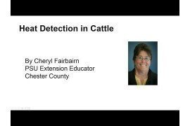 Heat Detection in Beef Cattle