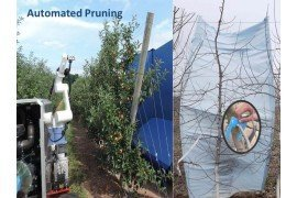 Orchard Automation - Dormant Pruning