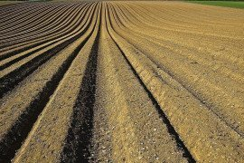 Persistence of Herbicides in Soil