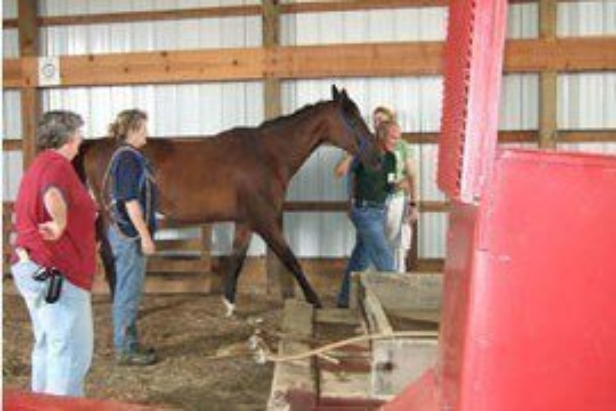 Large Animal Rescue Training - LART