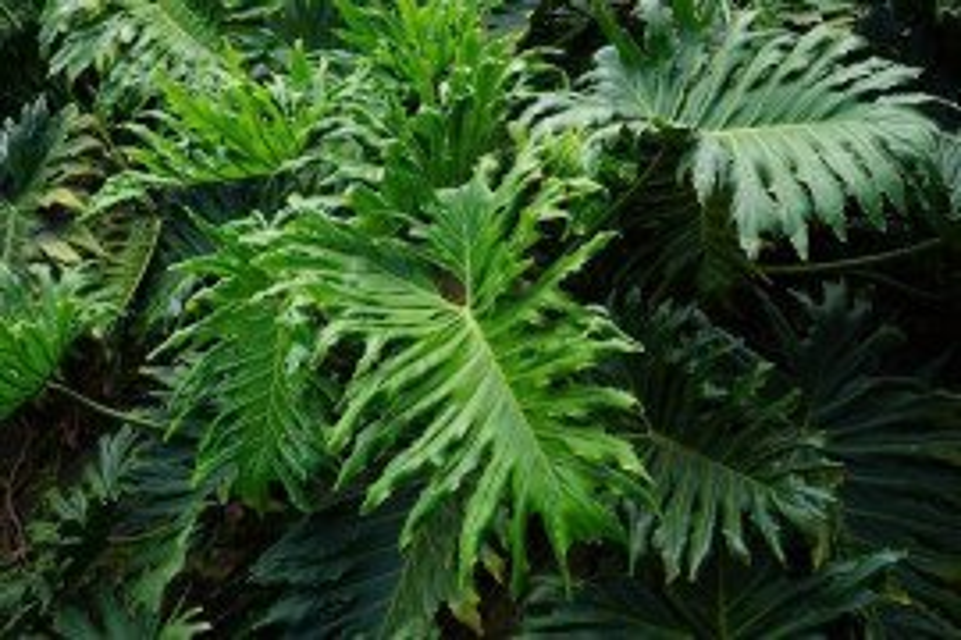 Key Plants And Key Diseases Indoors