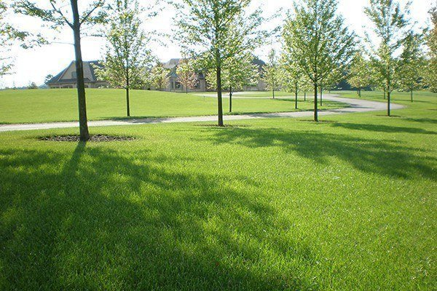 Turfgrass Species for Pennsylvania