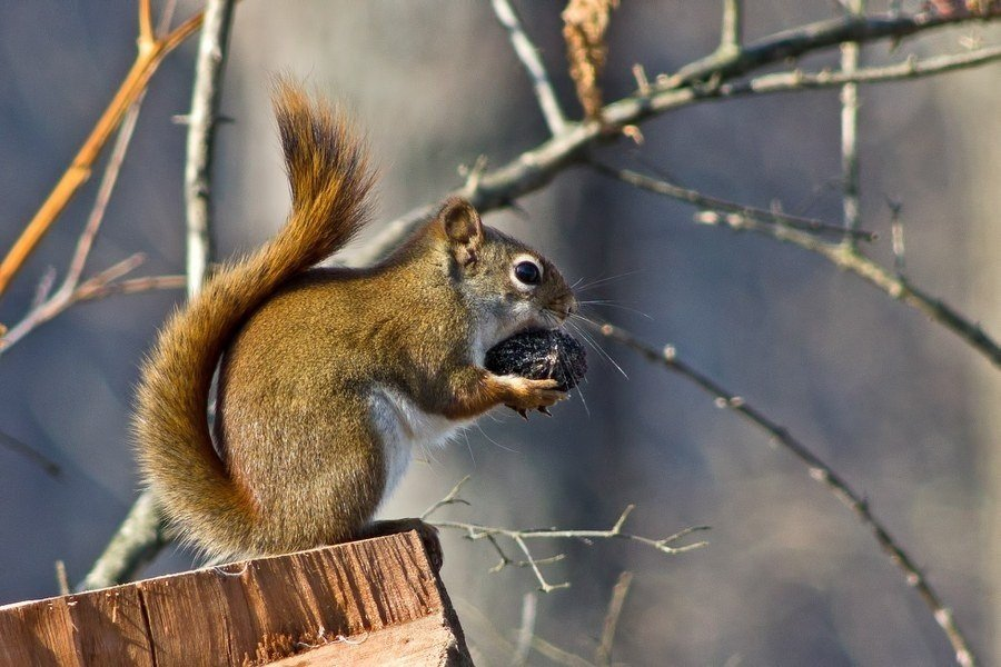 Landscaping for Wildlife: Trees, Shrubs, and Vines