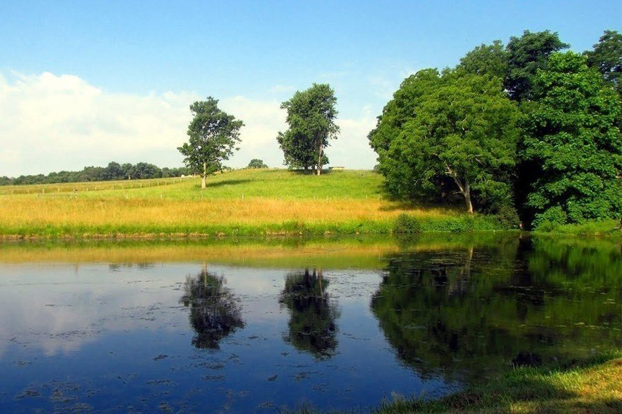 Pond Management for Rural and Farm Pond Owners