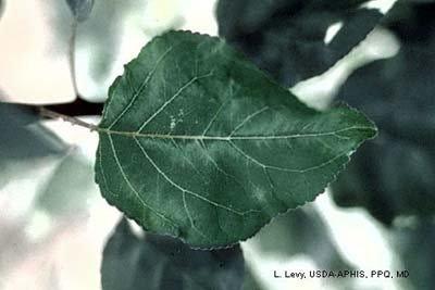 Photo acknowledgments: L. Levy, USDA-APHIS;