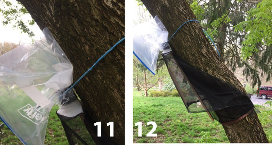 How To Build A New Style Spotted Lanternfly Circle Trap