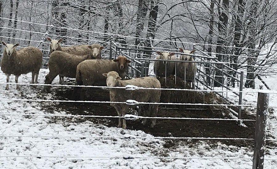Sheep Flocks