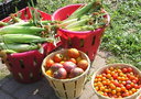 Abundance of fresh vegetables from Victory Garden Workshop