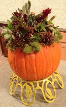 Pumpkin with Succulents