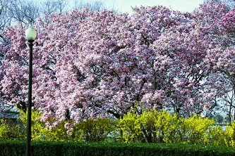 To Prune or Not to Prune: It all Depends on Flowering