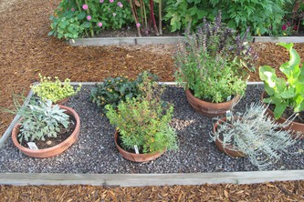 Part of the Raised Bed Garden