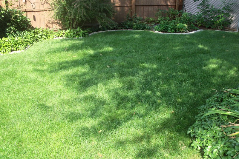 Growing Grass In Shaded Areas