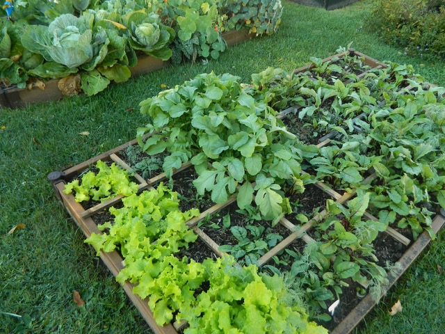 Create a square foot high yield vegetable garden pike for Creating a vegetable garden