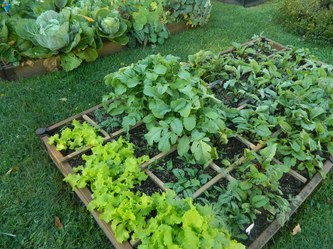 Create a Square-Foot, High-Yield Vegetable Garden