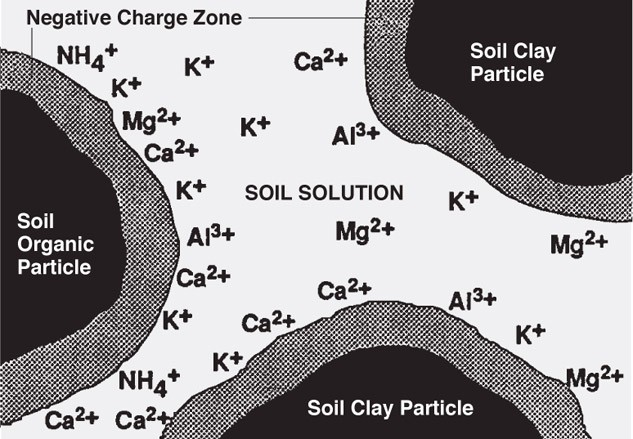 Exchangeable and Solution K in Soil